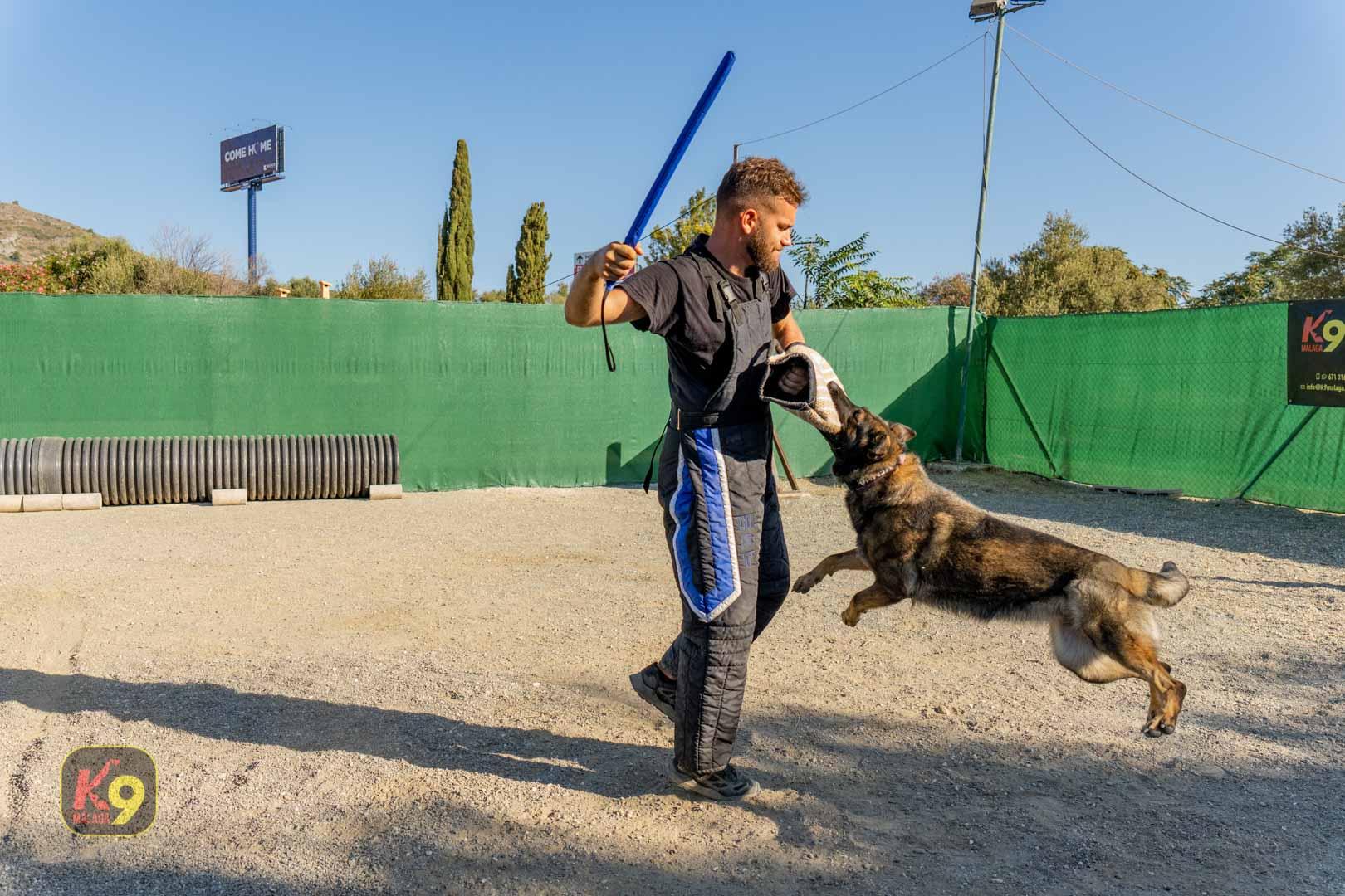 Perros de Protección deportiva en Escuela Canina K9 Málaga