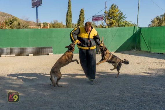Obediencia especializada en Escuela Canina K9 Málaga