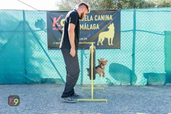 Adiestramiento Canino K9 Málaga - Ejercicios de obediencia avanzada