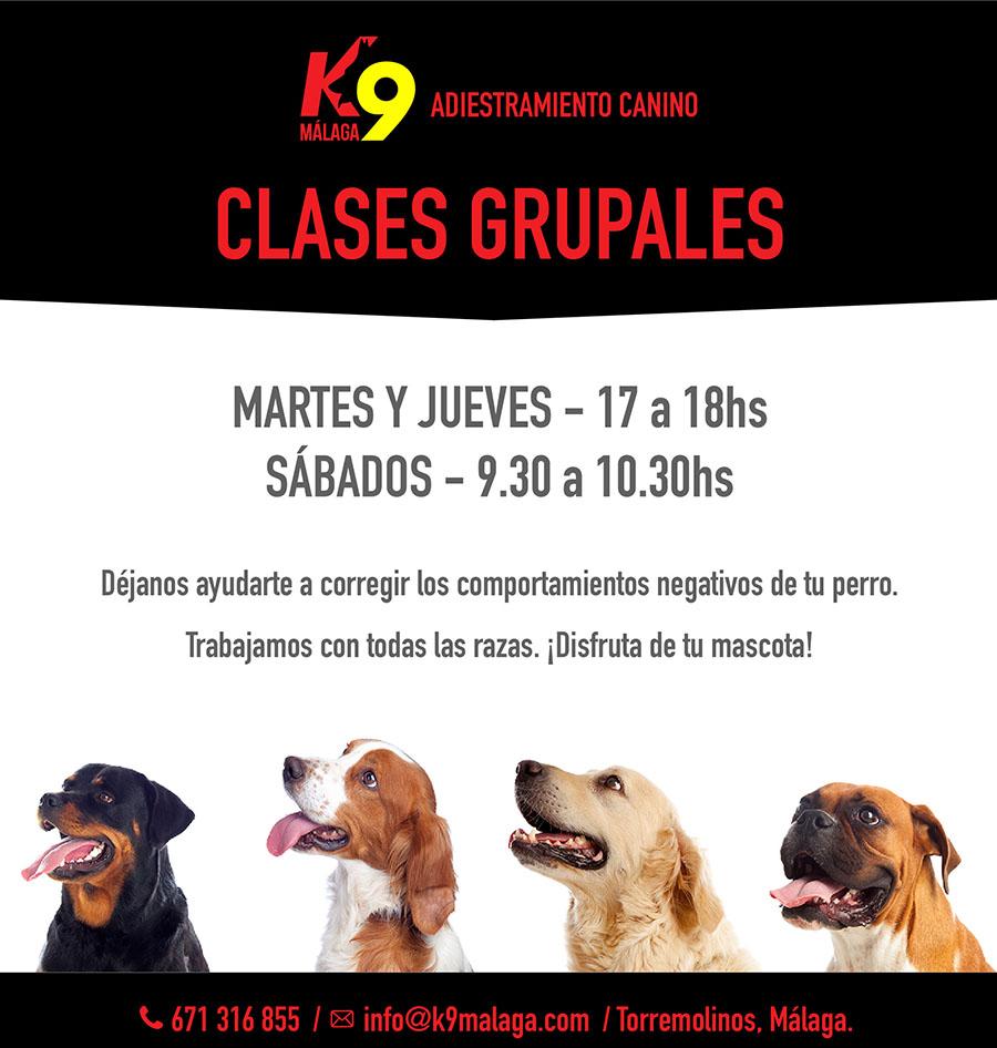 clases grupales 2020 adiestramiento canino malaga