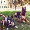 Gestión de Estímulos estresantes – Adiestramiento Canino