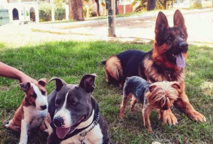 Gestión de estímulos estresantes - adiestramiento canino malaga