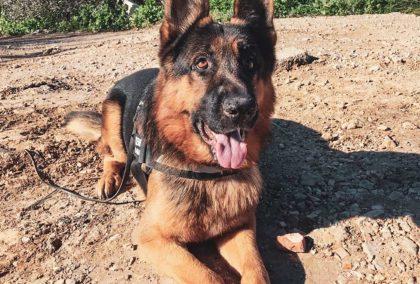 clases grupales adiestramiento canino K9 malaga