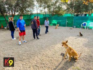 permanencias-entrenar-el-quieto-adiestramiento-canino-k9-malaga-1