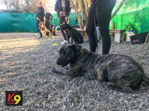 permanencias-entrenar-el-quieto-adiestramiento-canino-k9-malaga-2