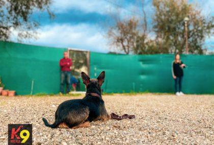 permanencias-entrenar-el-quieto-adiestramiento-canino-k9-malaga