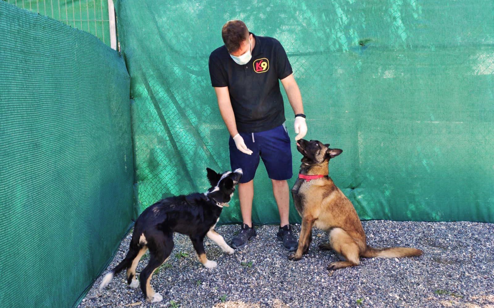 adiestramiento-canino-k9-malaga-retoma-sus-actividades-18-mayo-2020-1