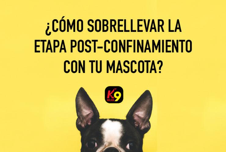 post-confinamiento-mascotas-k9-malaga-adiestramiento-canino-mayo-2020_5