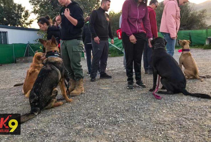 2020-02-14-k9-malaga-curso-adiestramiento-canino-wtmk-23