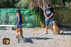 NUESTRO PERRO, UN CIUDADANO CANINO EJEMPLAR (CCE) Septiembre 2020 | K9 Málaga - Adiestramiento Canino