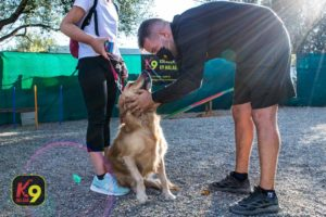 Programa Ciudadano Canino CCE | Septiembre 2020 | Escuela Canina K9 MÁLAGA - Adiestramiento