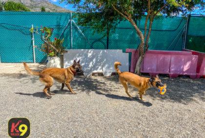 2020-06-13-K9-malaga-adiestramiento-canino-entrenamiento-14