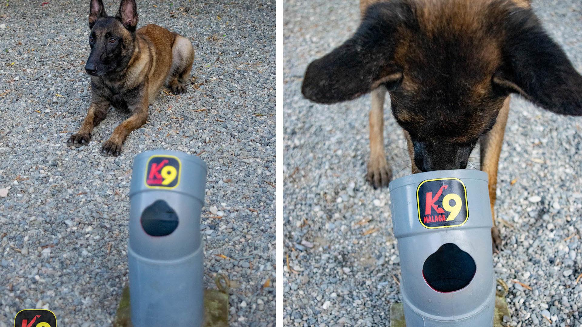 2020-08-13-K9-malaga-WTMK-deteccion-disciplina-deportiva-canina