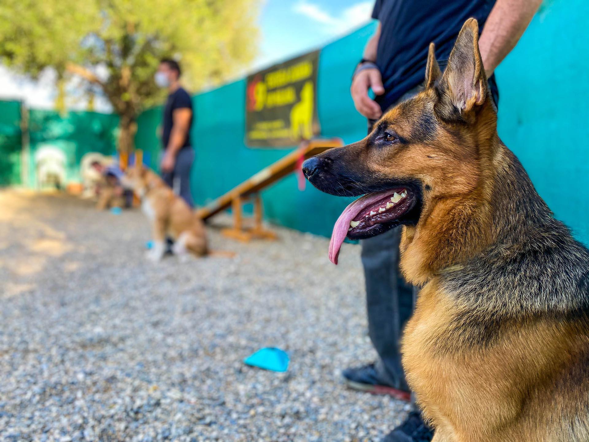 Curso Adiestrador Canino Profesional impartido por K9 Málaga. Acreditado por ANACP mediante Resolución ACACP 1434/2020