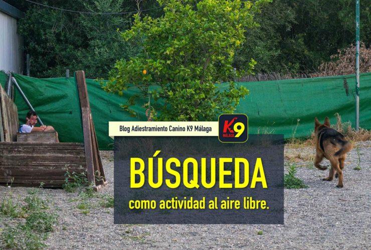 Busqueda como actividad al aire libre - K9 malaga blog adiestramiento canino