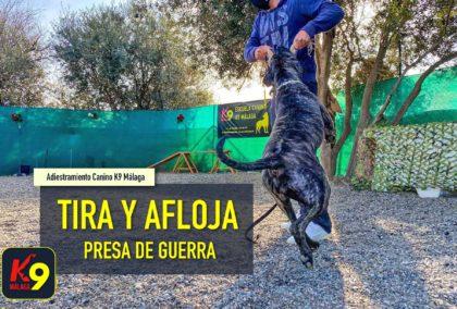 Tira y afloja (Presa de guerra) Adiestramiento Canino - Banner K9 Malaga