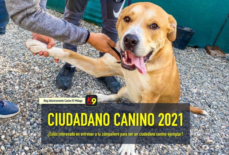 ciudadano canino ejemplar 2021 - K9 Malaga Escuela Canina
