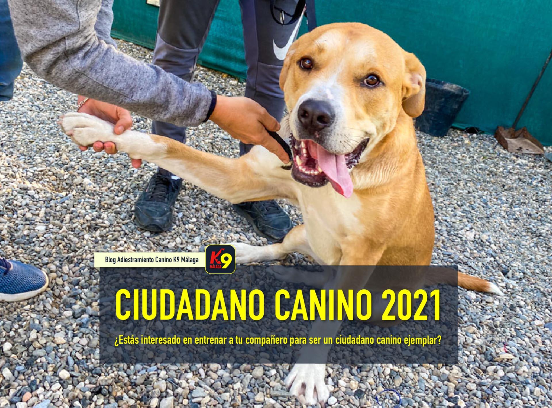 Prepárate para el próximo Ciudadano Canino Ejemplar 2021