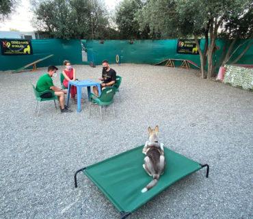 Cursos Adiestrador Canino Profesional en Escuela Canina K9 Málaga 2021